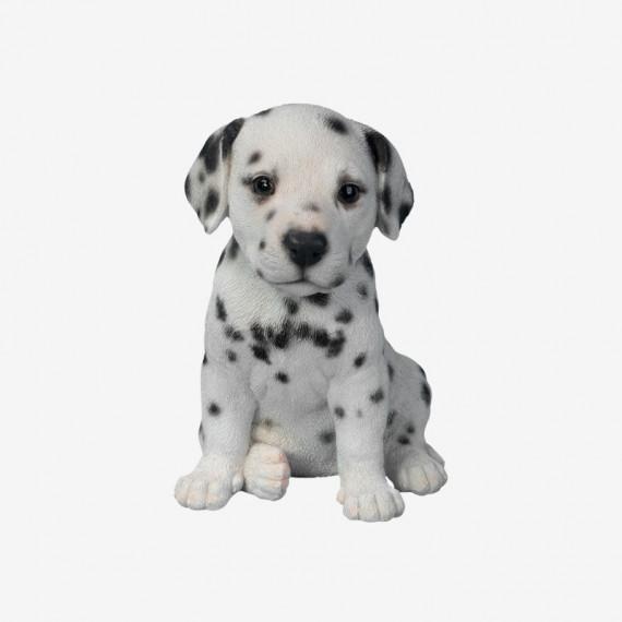 Baby Dalmatian